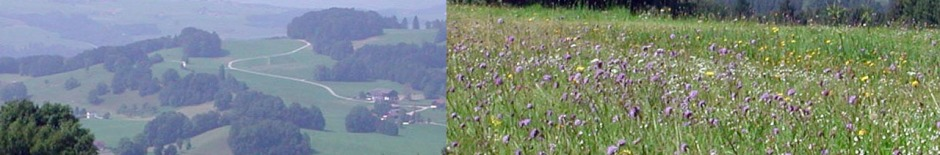 Traits with ecological functions: Meadows in Austria