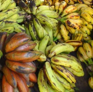 Red, green and yellow bananas - now the genome is sequenced