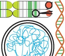 Aspects of the Plant Nuclear Genome (ELS article)
