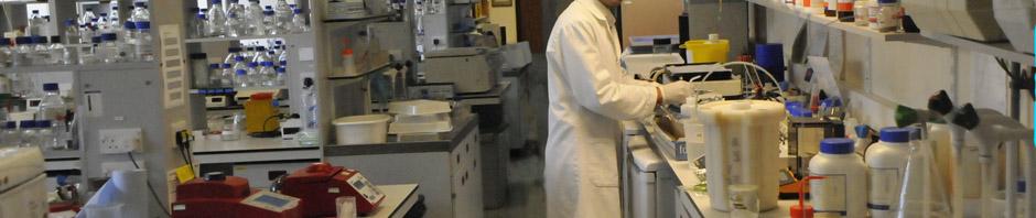 Working in the Molecular Cytogenetics lab