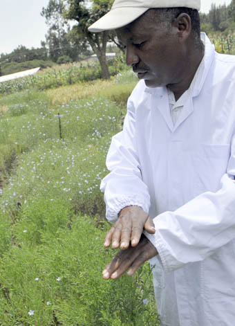 Worku Mhiret in Linseed trial plots