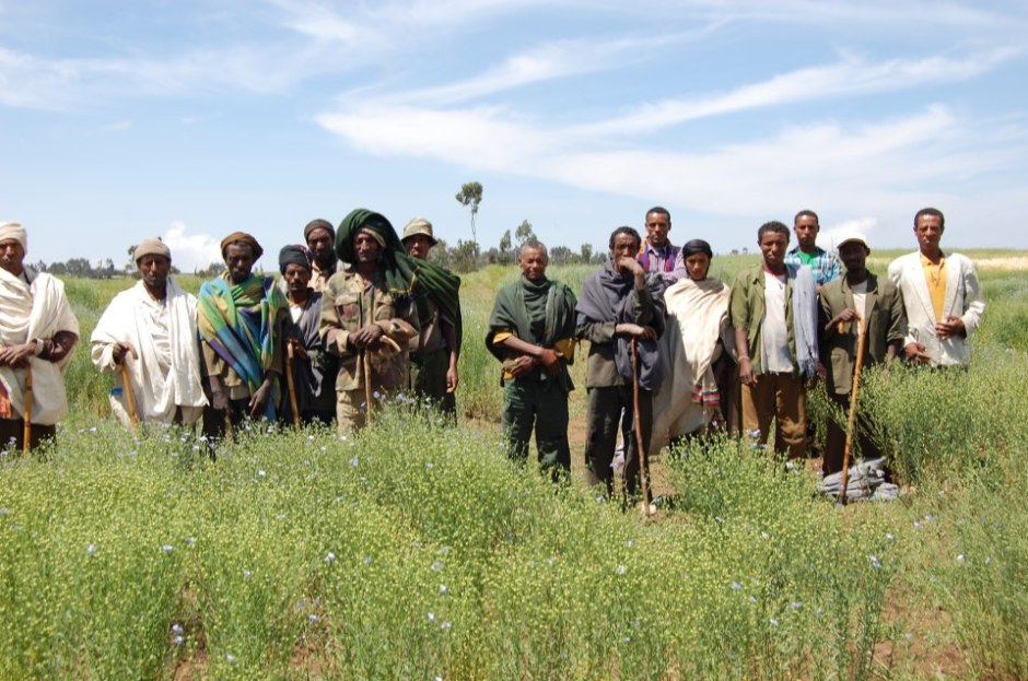 Farmers and linseed trials in Dhabat, Ethiopia