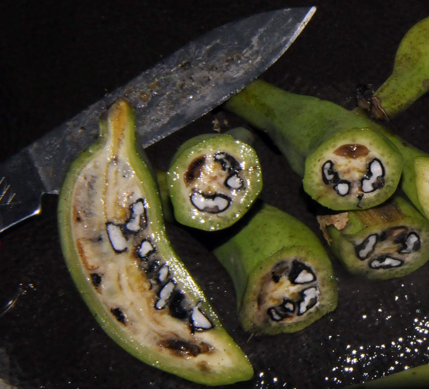 Image result for Edible wild banana species