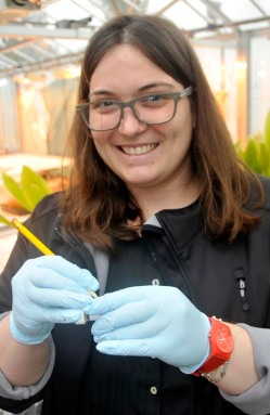 Natália Melloni from UNESP, Brazil, fixing sugar cane root tips
