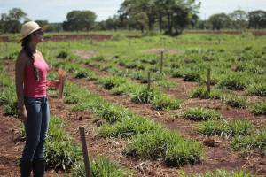 Fabiola Santos overlooking Brachiaria trials in Brazil