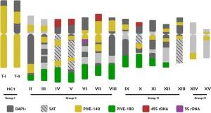 Pistachio chromosomes: Sola-Campoy et al. 2015 PLoS One.