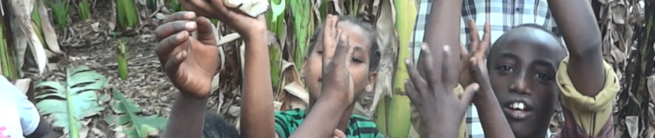 Stachy enset (Ensete ventricosum) corms held by children in a smallholding in Ethiopia, where enset starch is an important staple and food security crop.